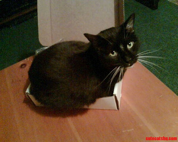 How Does It Go If It Fits …