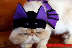 I Am Vengeance. I Am The Night. I Am Batcat.