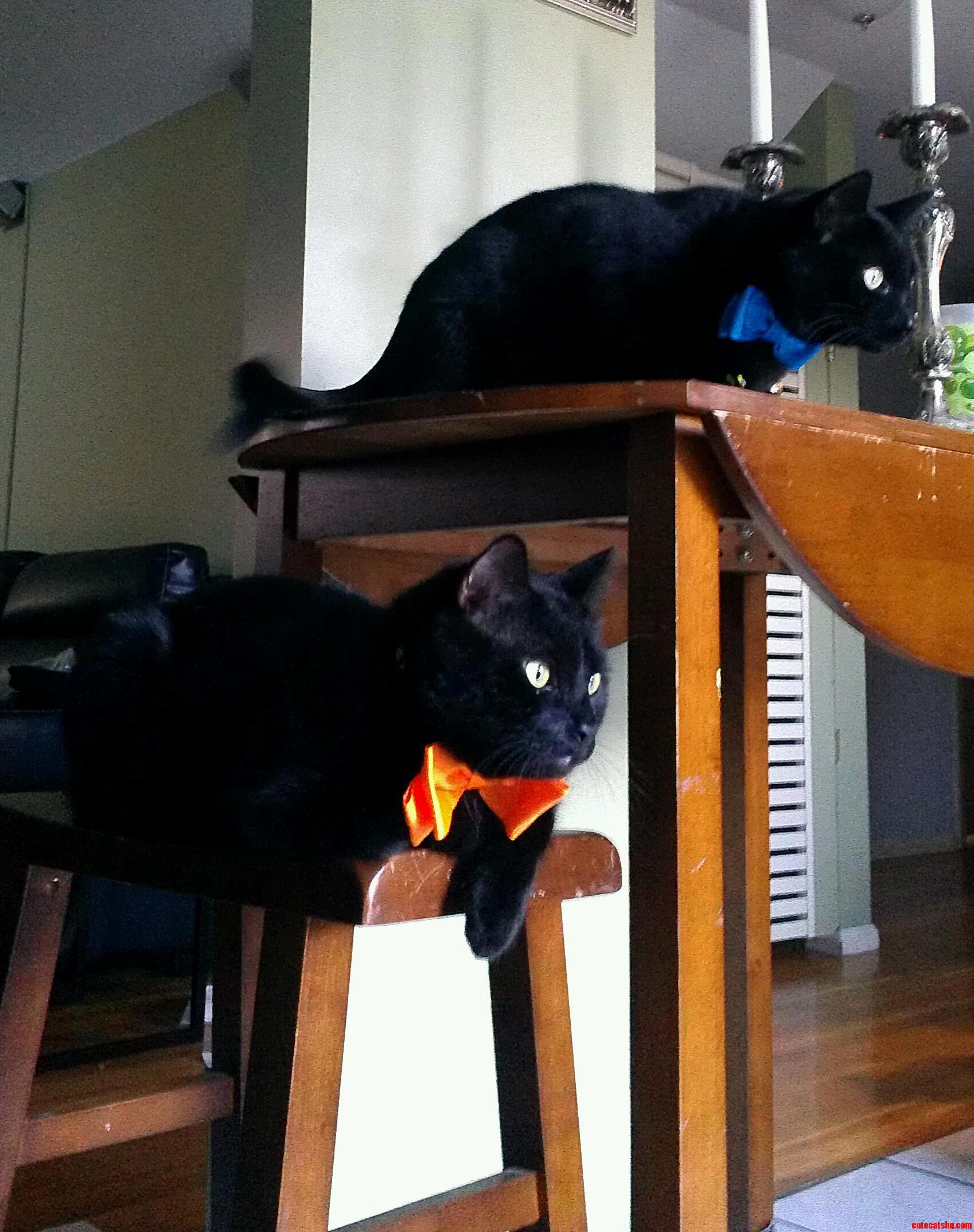 I Bought My Boys Some Bow Ties Today.