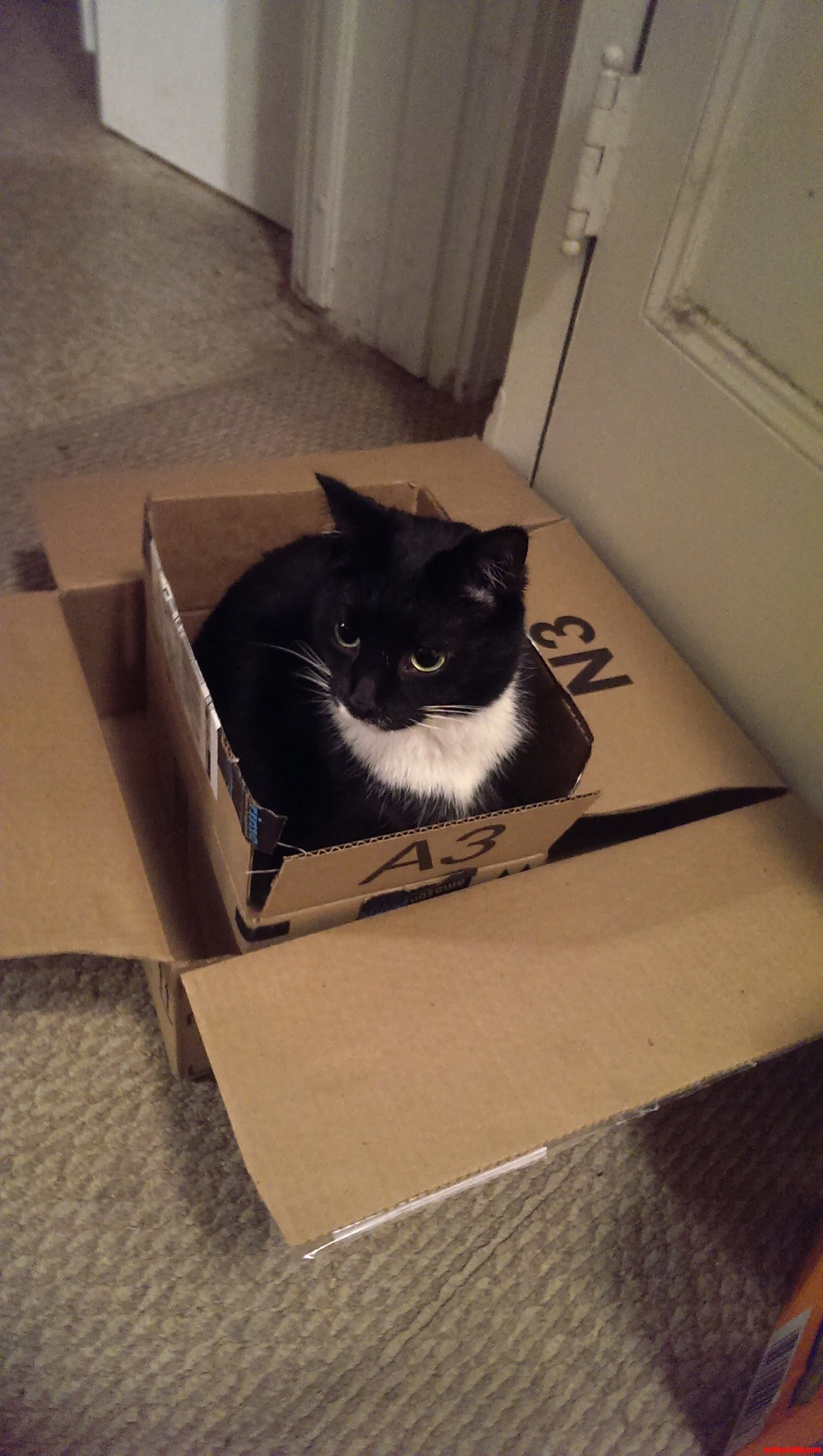 I Came Home To This. Boxception.