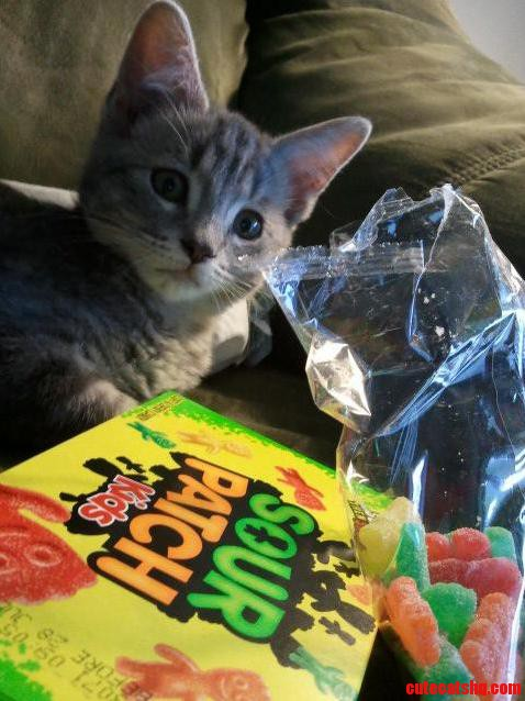 I Can Haz Candy