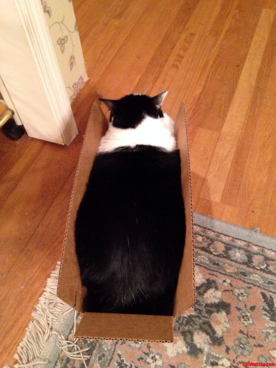 I Fit So I Sit.