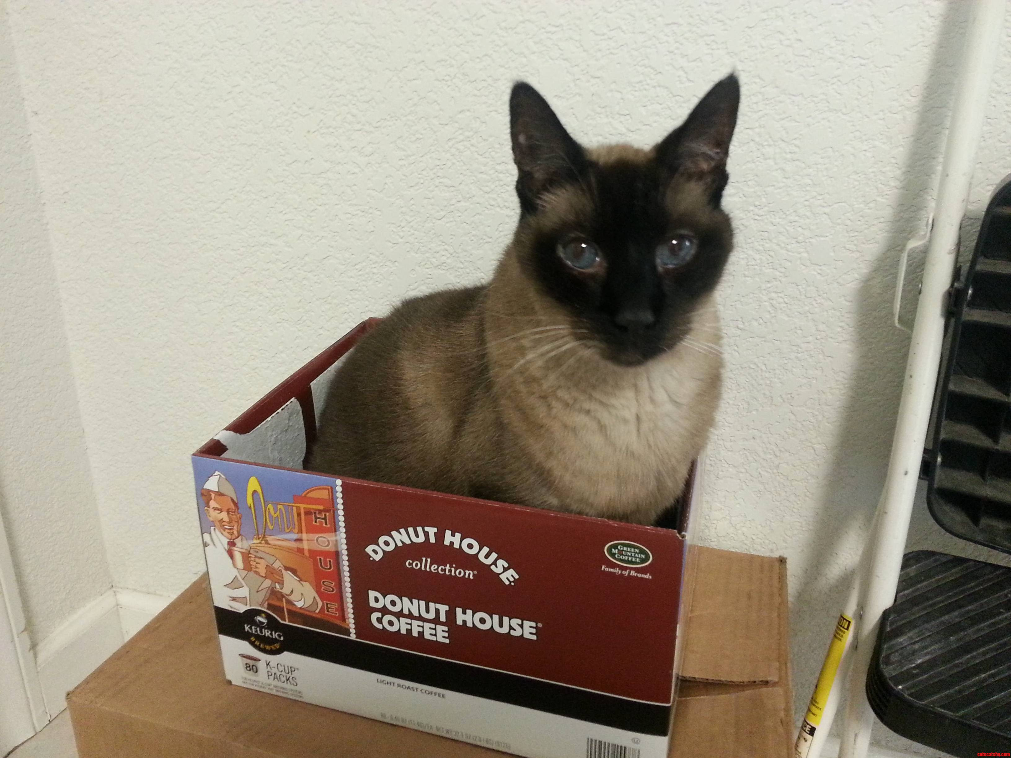 I May Be 17 But If I Fits I Still Sits.
