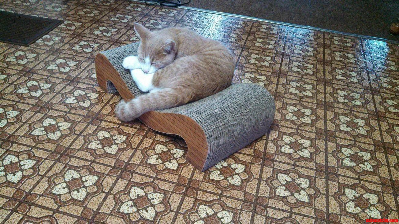 I Put Catnip On The Scratcher. This Was His Reaction.