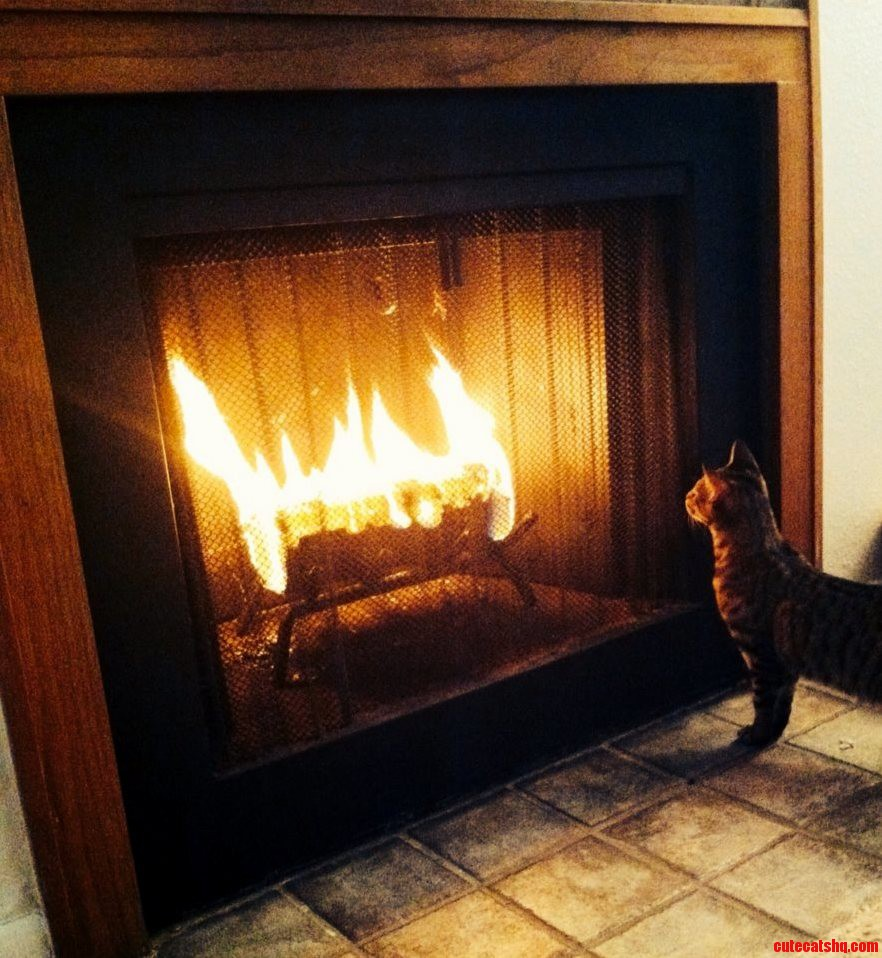 I Think My Cat Butter Likes The Fire We Have Going.