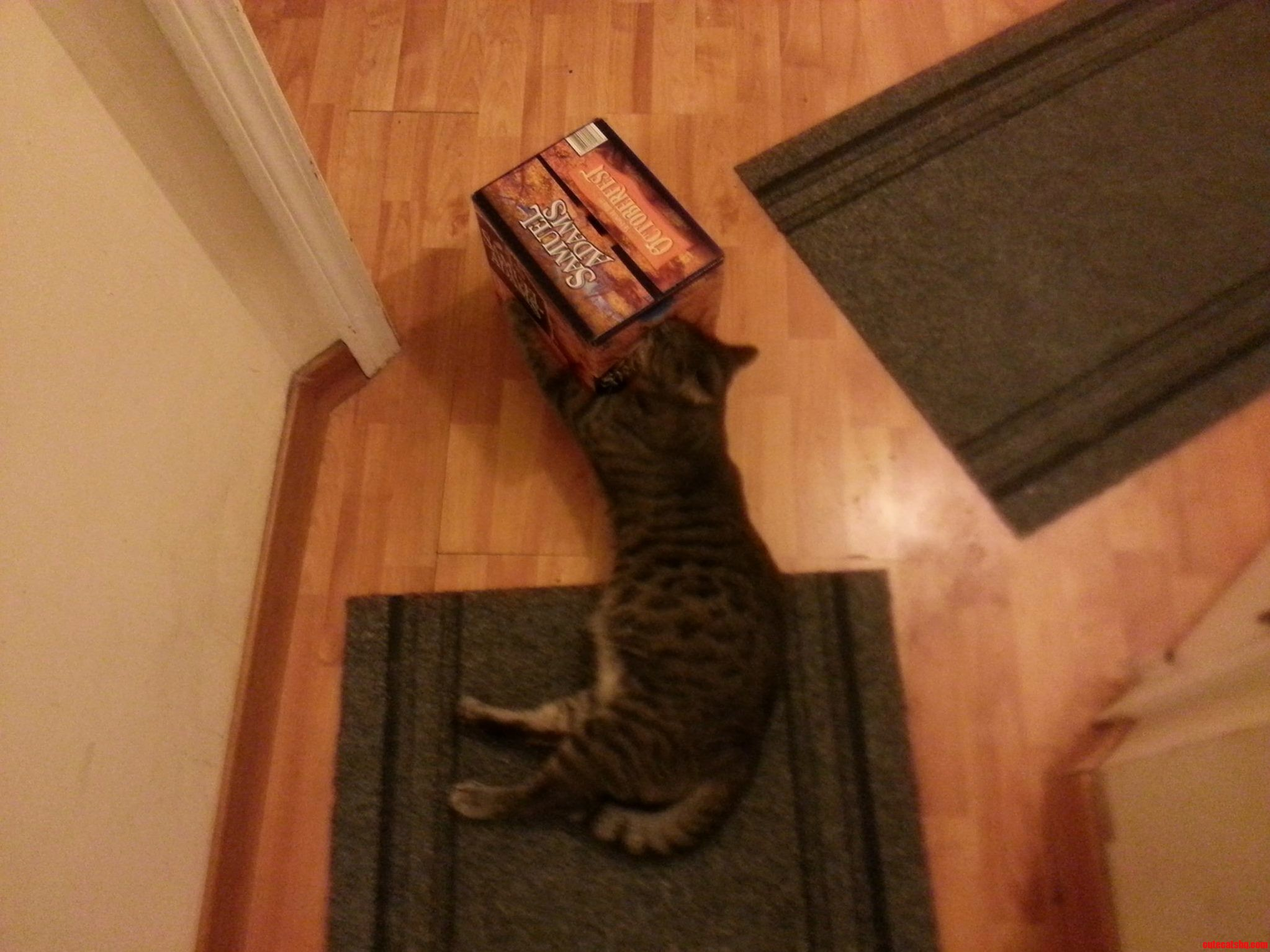 I Think My Cat May Have A Problem….