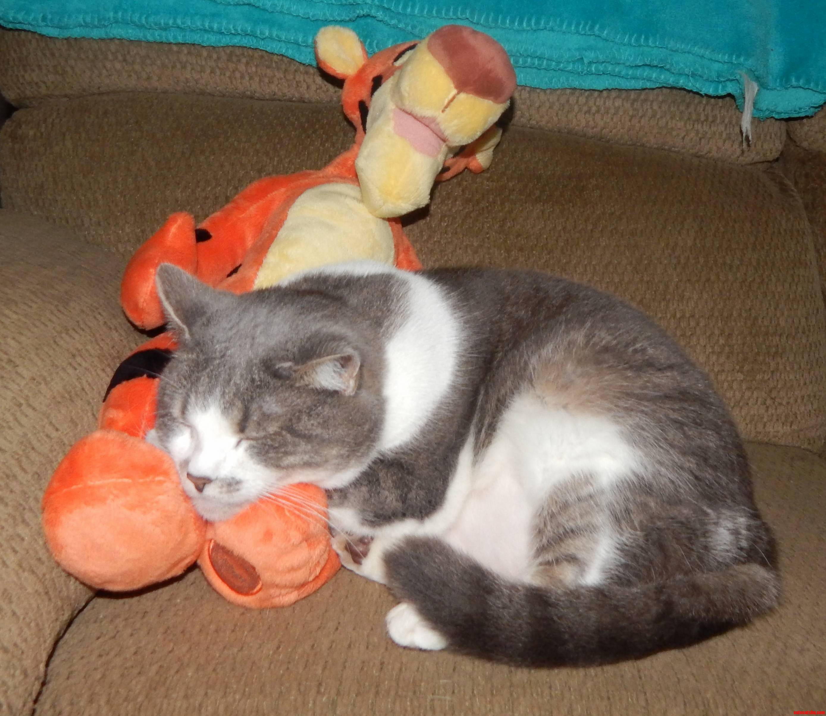 I Was Busy So She Decided To Take One Of Her Many Naps With Tigger Today.