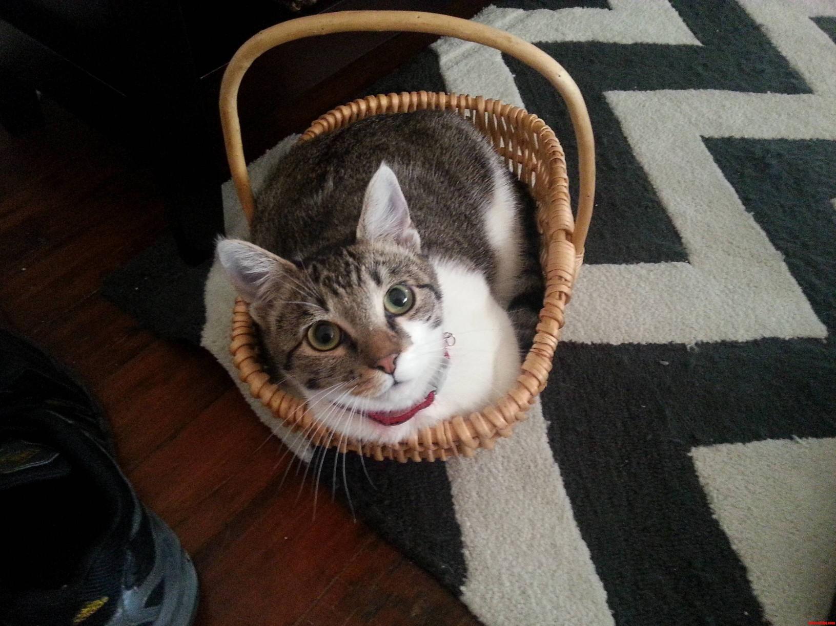 If I Fits I Sits Zissou The Kitty