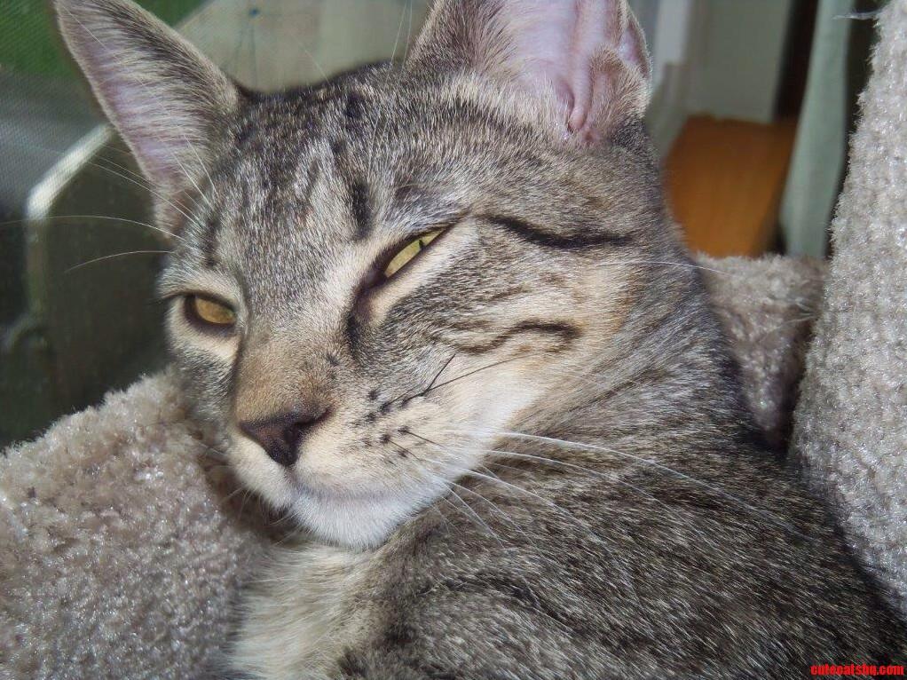 Irresistible Gg Kitty