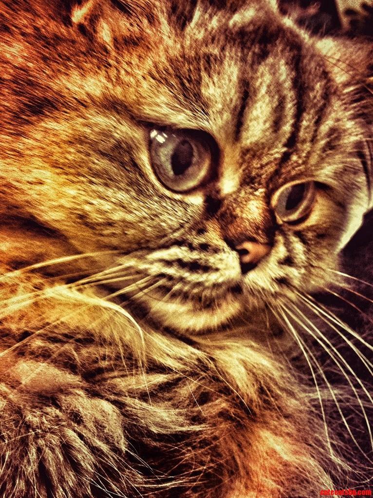 Itap Of My Cat. Best Cat Ever.