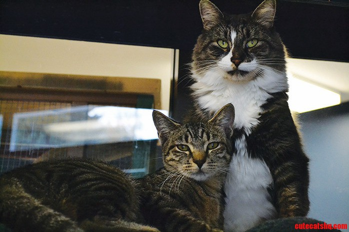 Julia And Jagger – These Two Would Like To Stay Together.