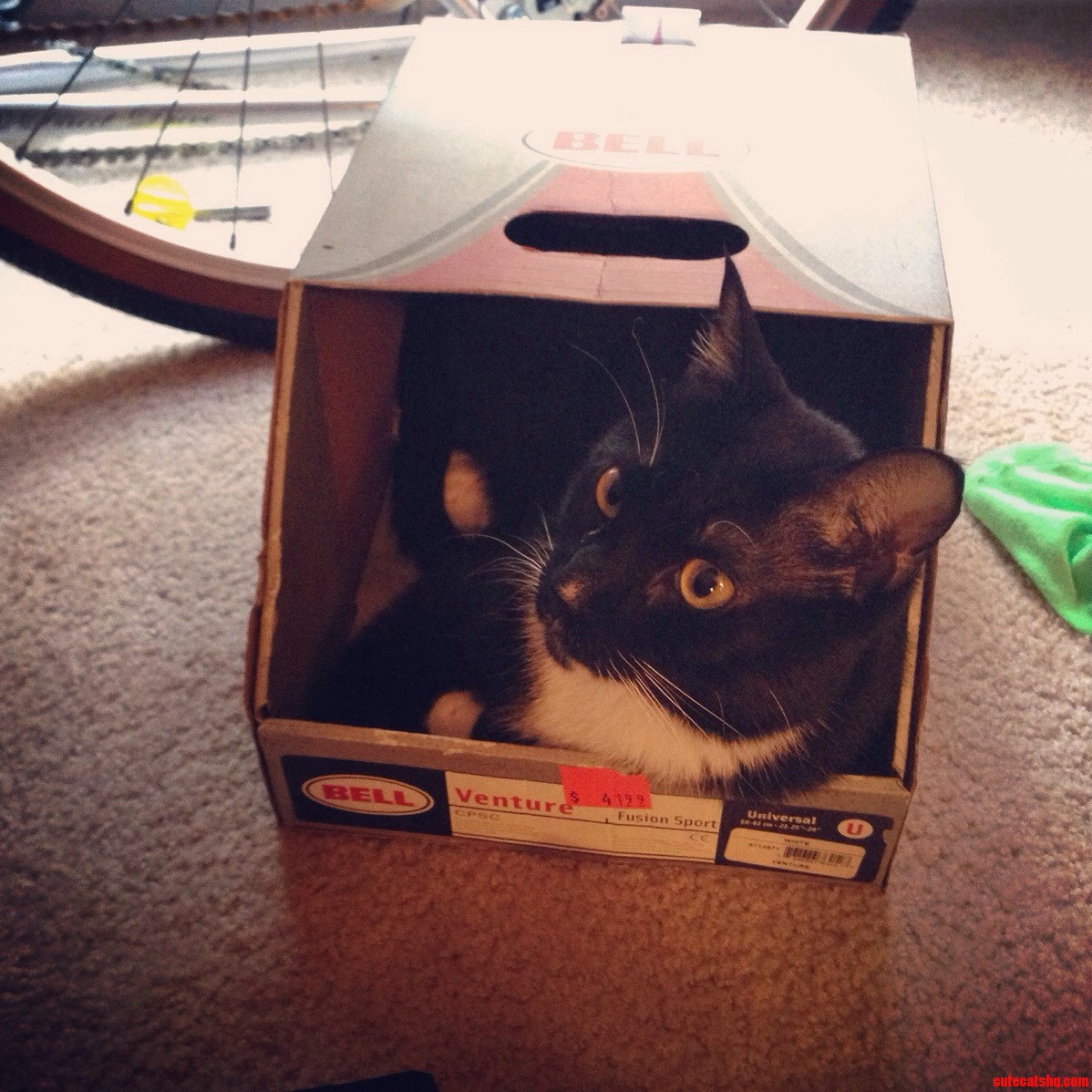 Just Another Cat In A Box