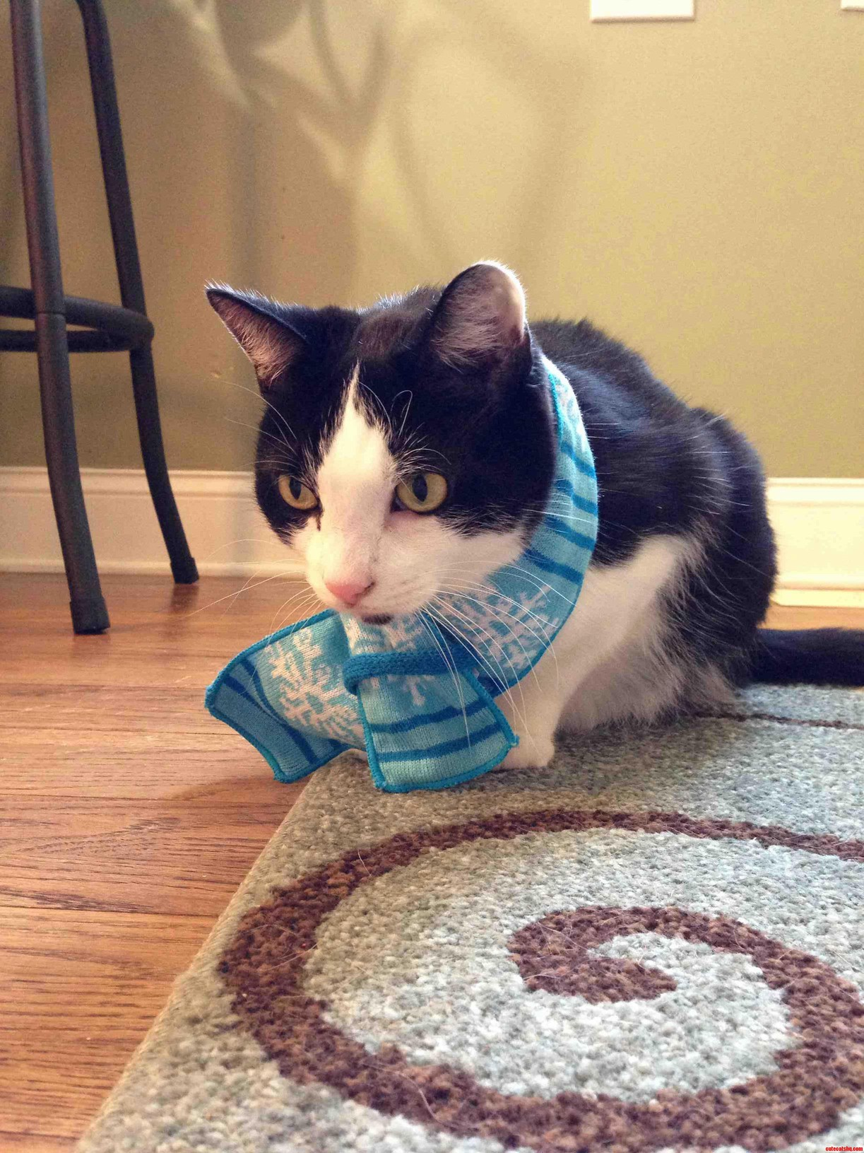 Just My Cat Wearing A Scarf.