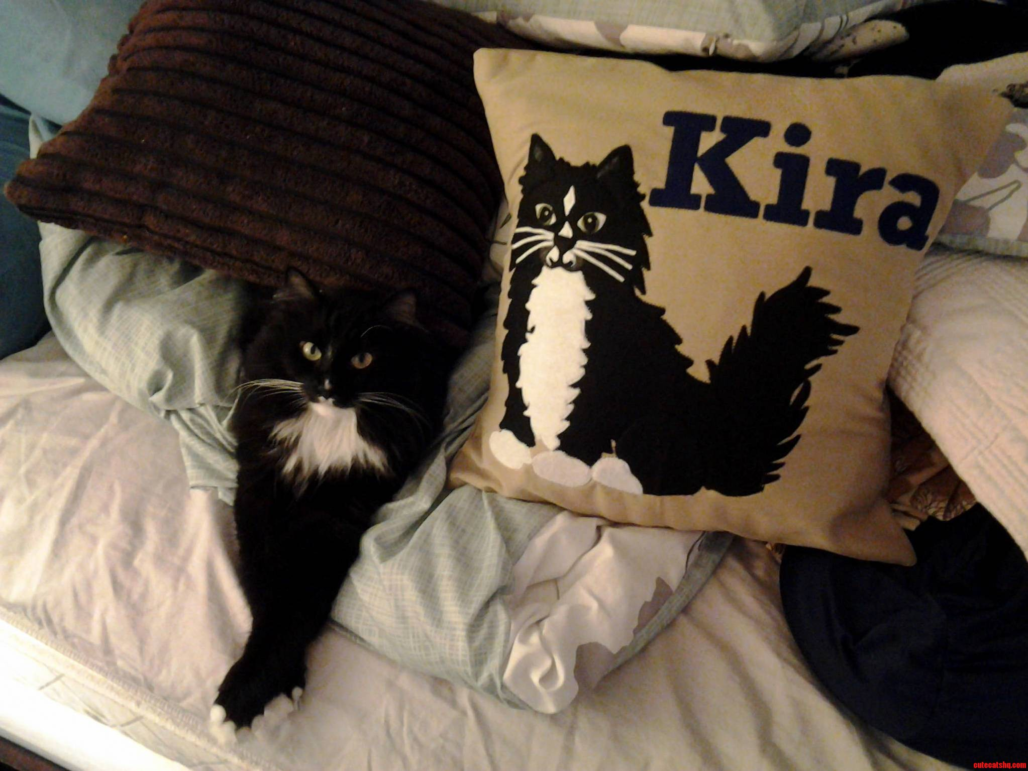 Kira Showing Off Her Modeling Career