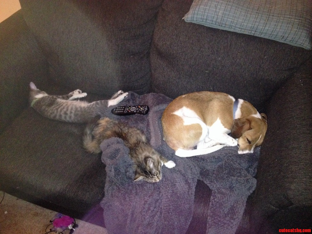 Kittens And Dog Are Finally Getting Along But They Took My Seat And The Damn Remote.