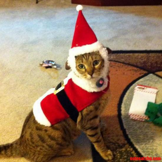 Kitty Claus