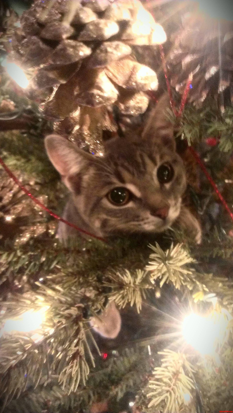 Kitty In The Tree.