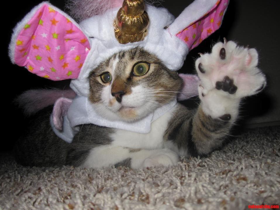 Kittys First Halloween