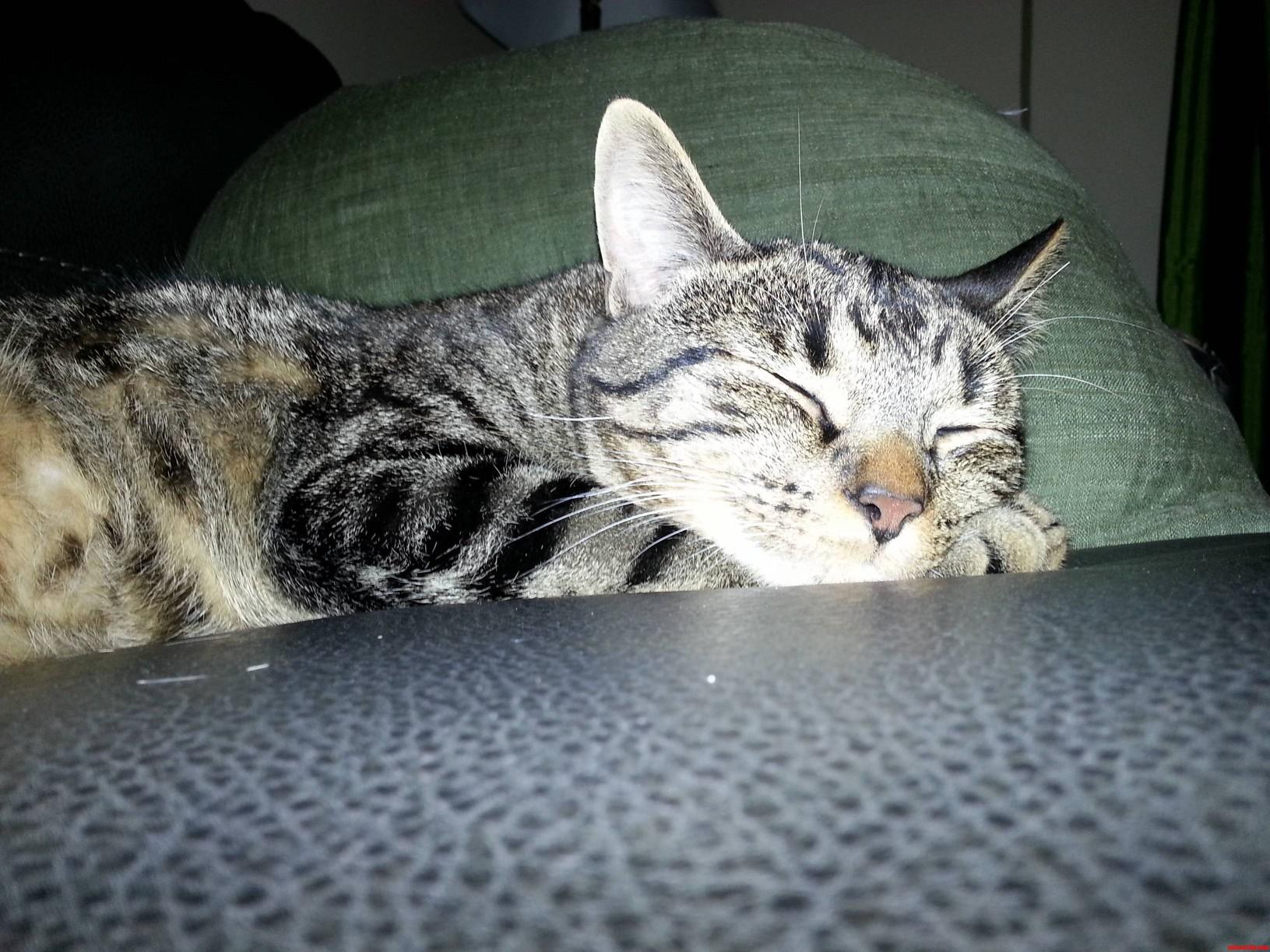 Lazy Sunday For My Bum Bert