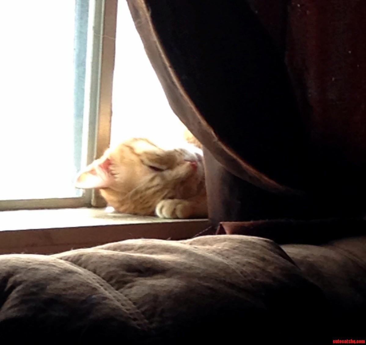 Lazy Sunday for my cat
