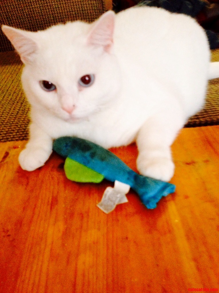 Lilly Playing With Her Fish
