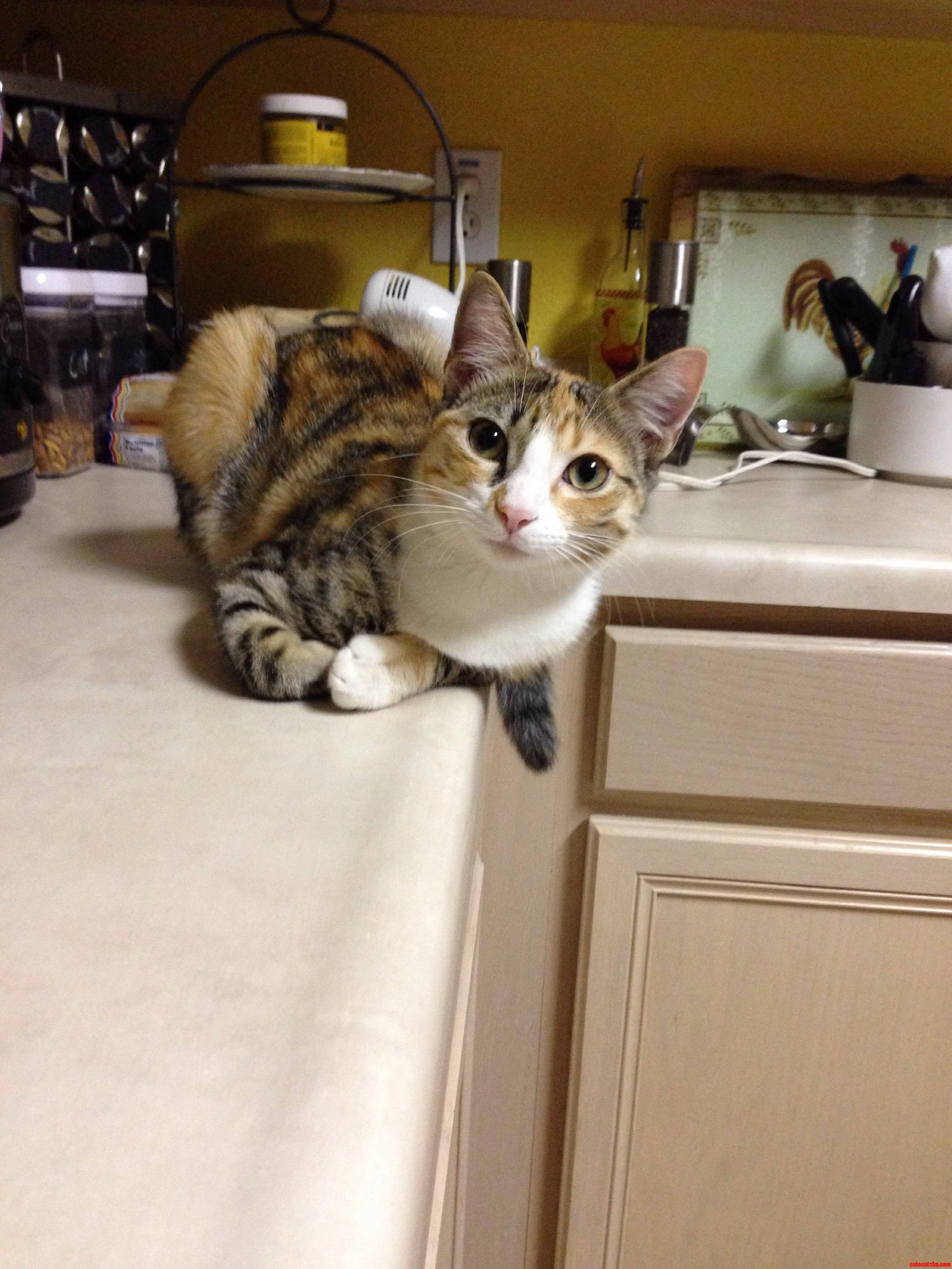 Little Miss Casual Watching Me Do The Dishes.