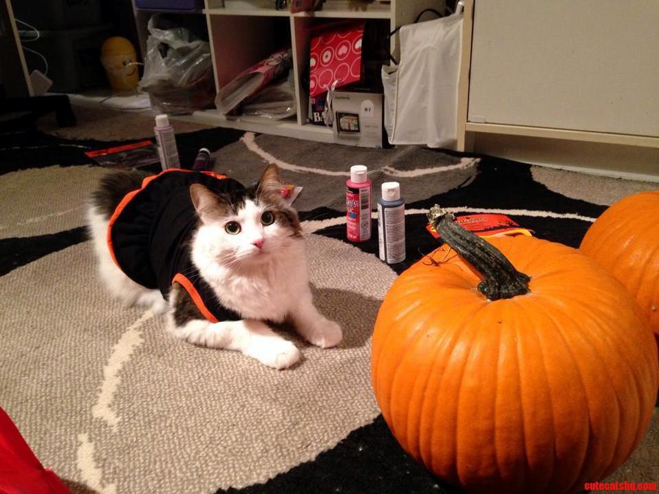 Mac In His Halloween Get-Up