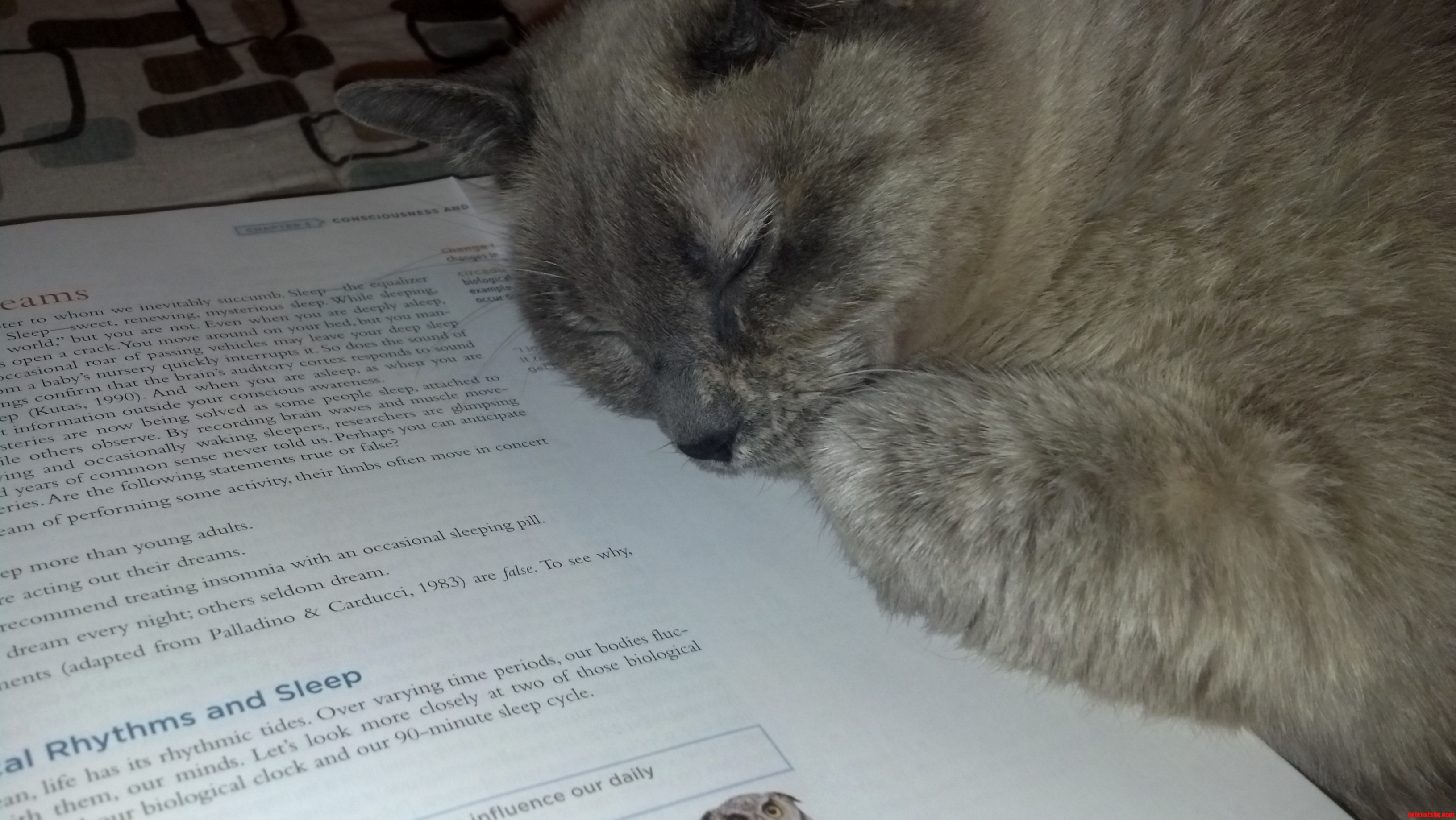 Marbles Helping Me Study 3