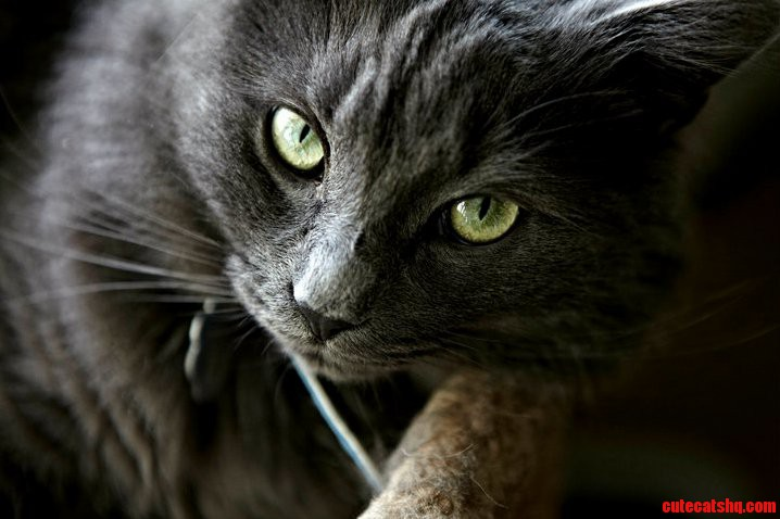 cat vocalization meanings