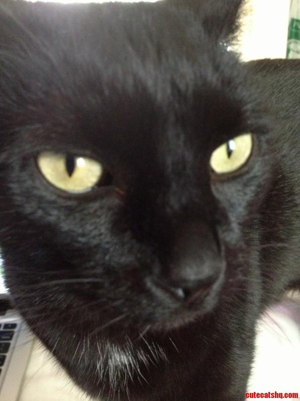 Meet Damien – Le Chat Noir