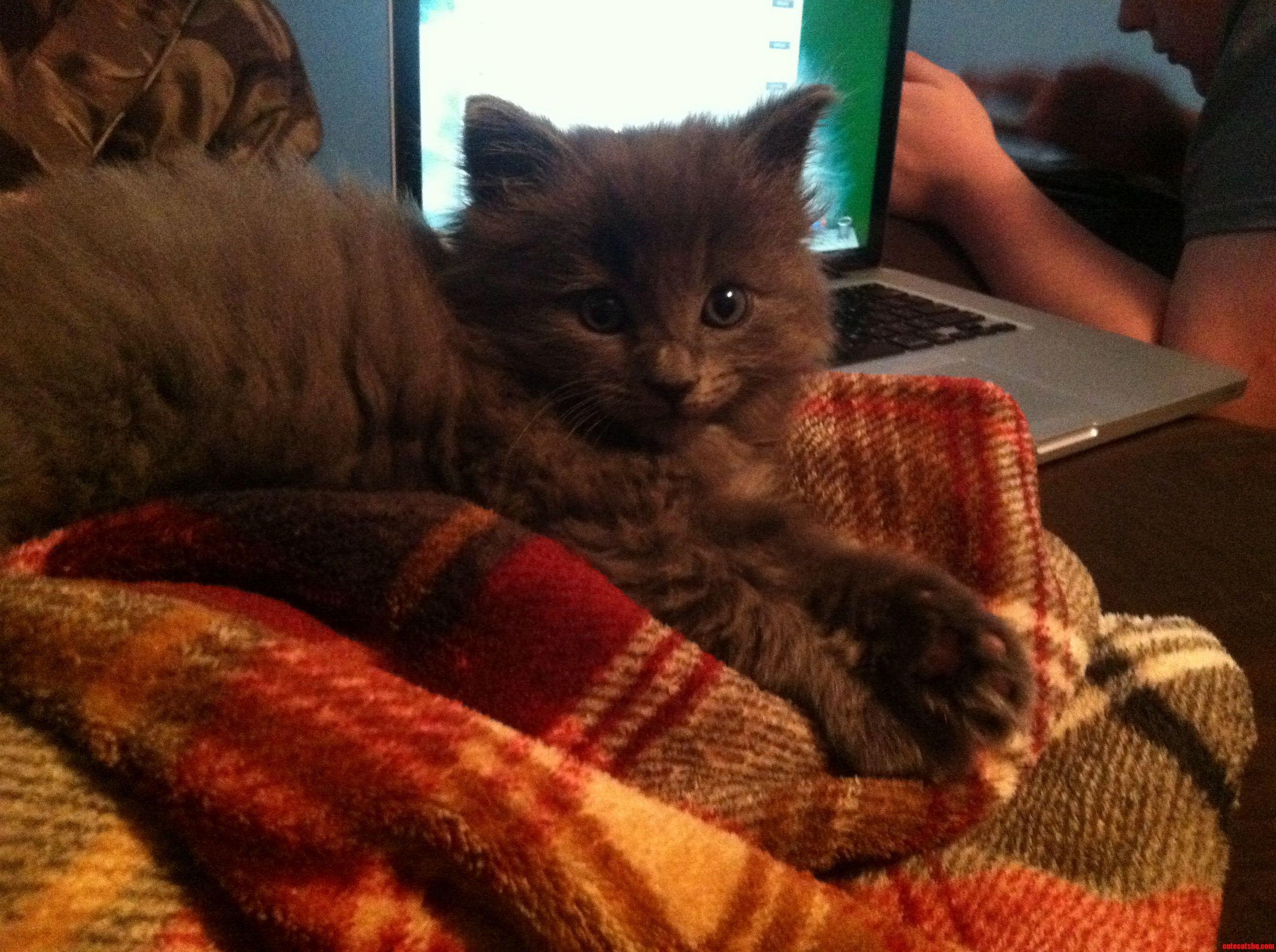 Meet J. Catsby