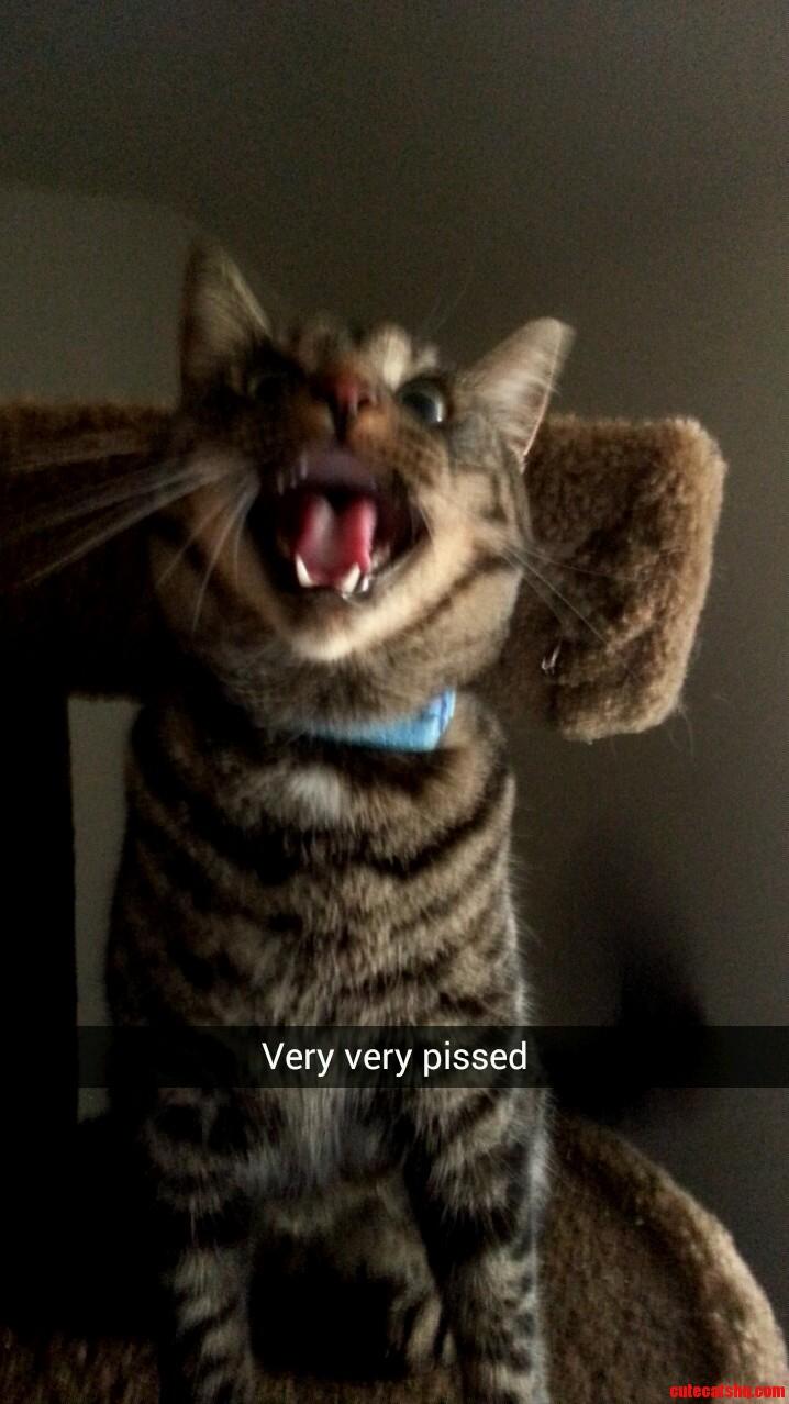 Meet My Cat Alfonzo