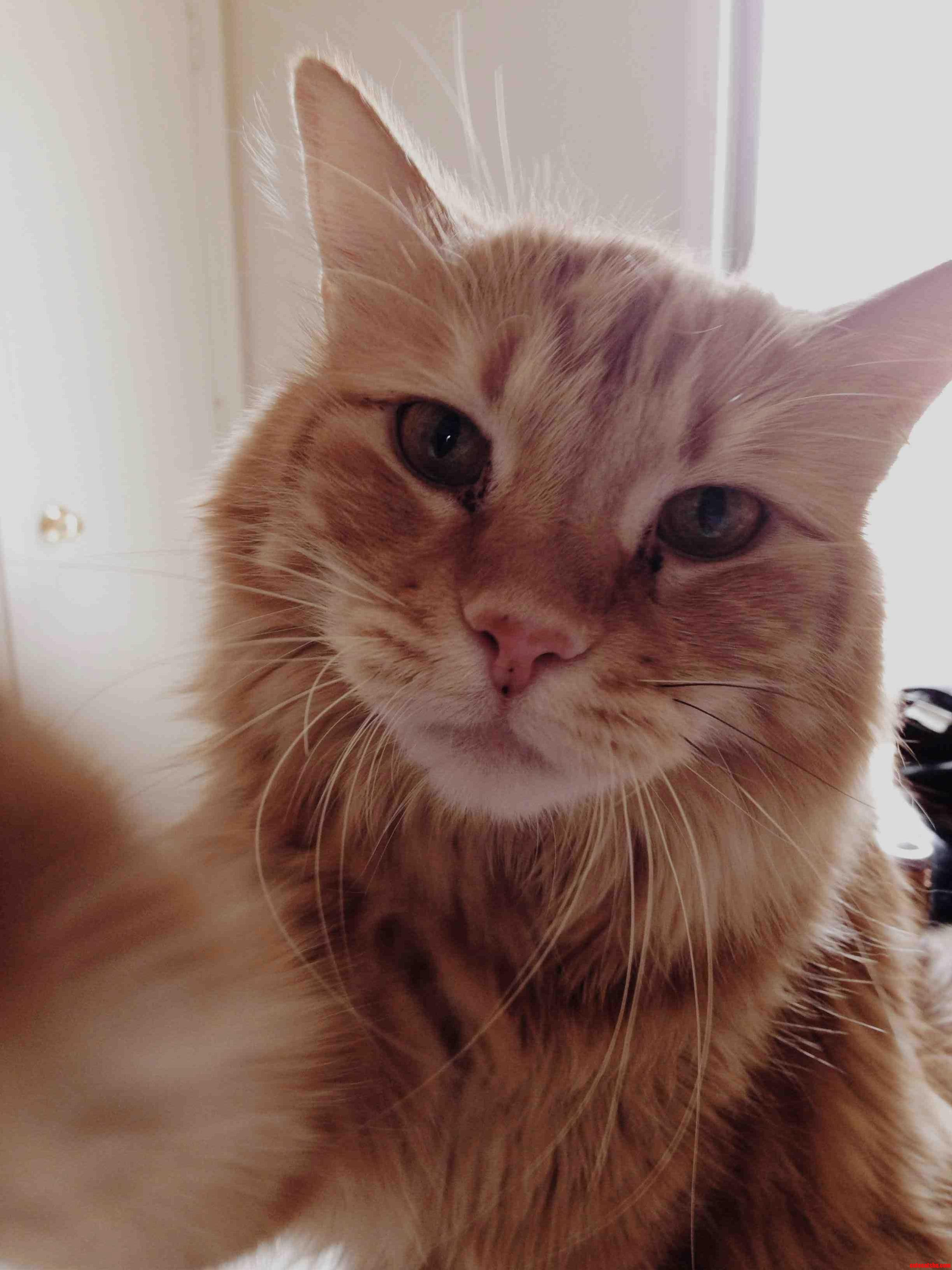 Meet Soco. He Likes Causing Trouble.