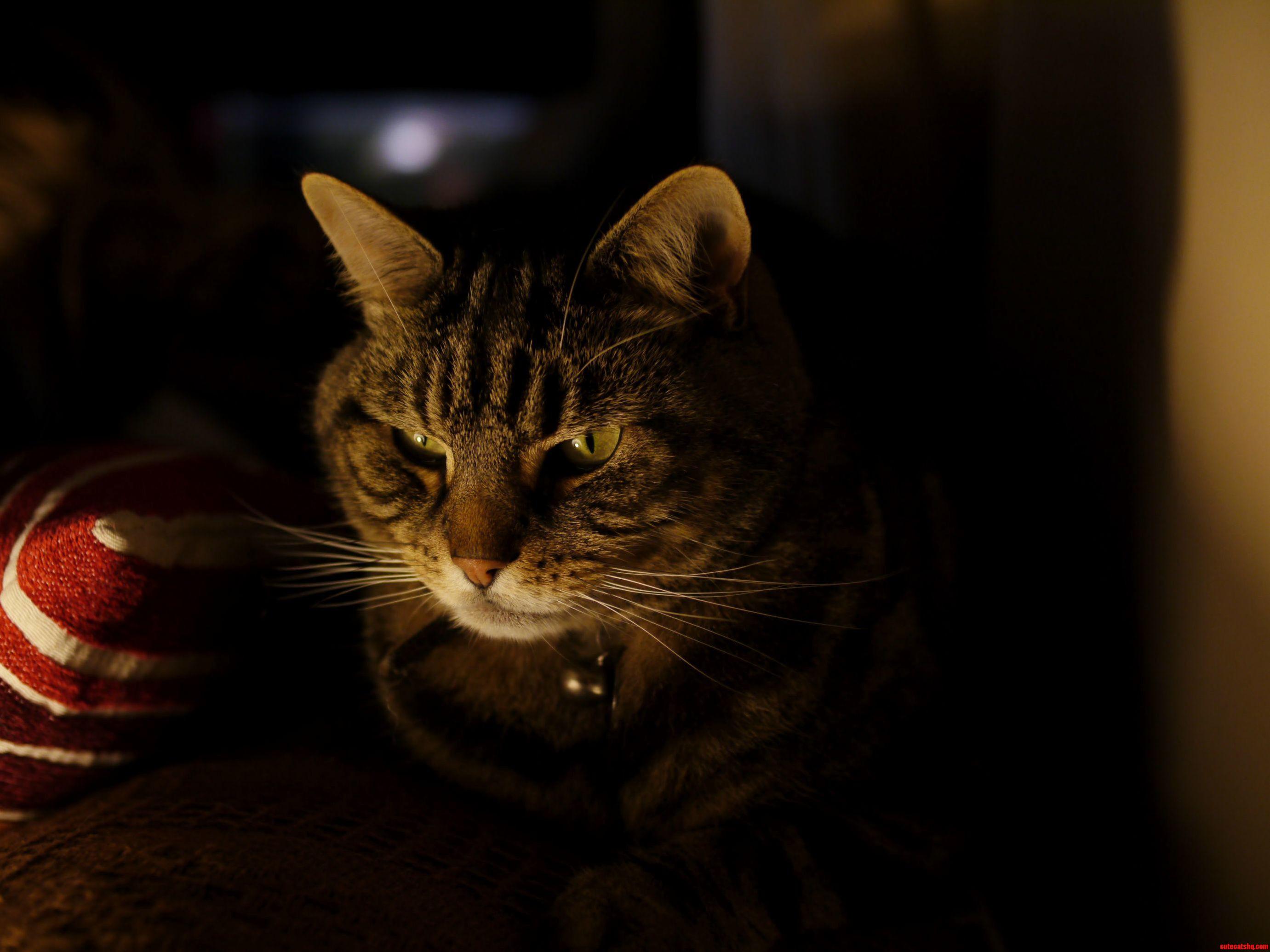 Murray The Cat Pondering.