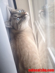 My Blue Eyed Baby Moose Loves The Window