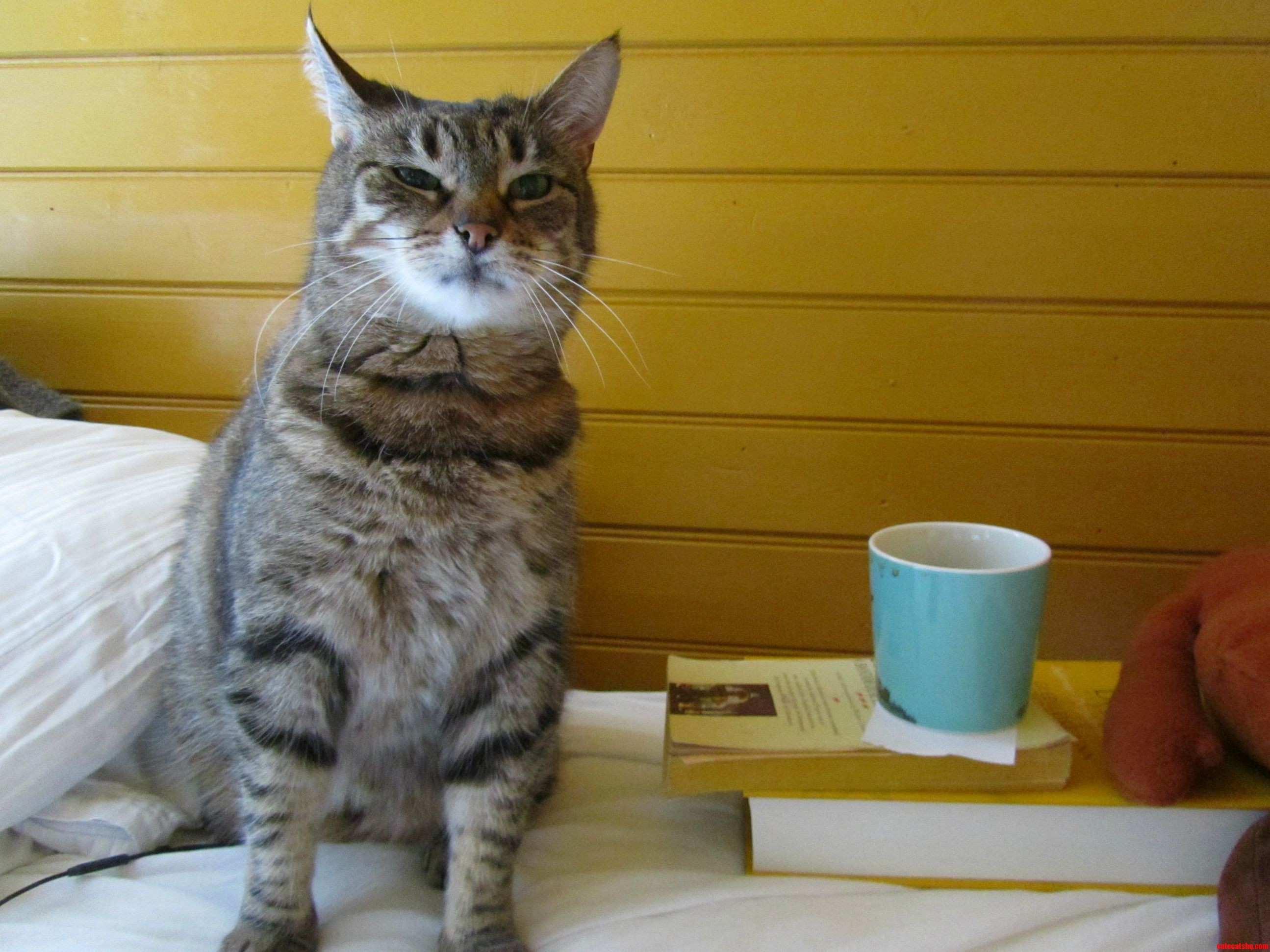 My Cat Before Her First Cup Of Coffee In The Morning.