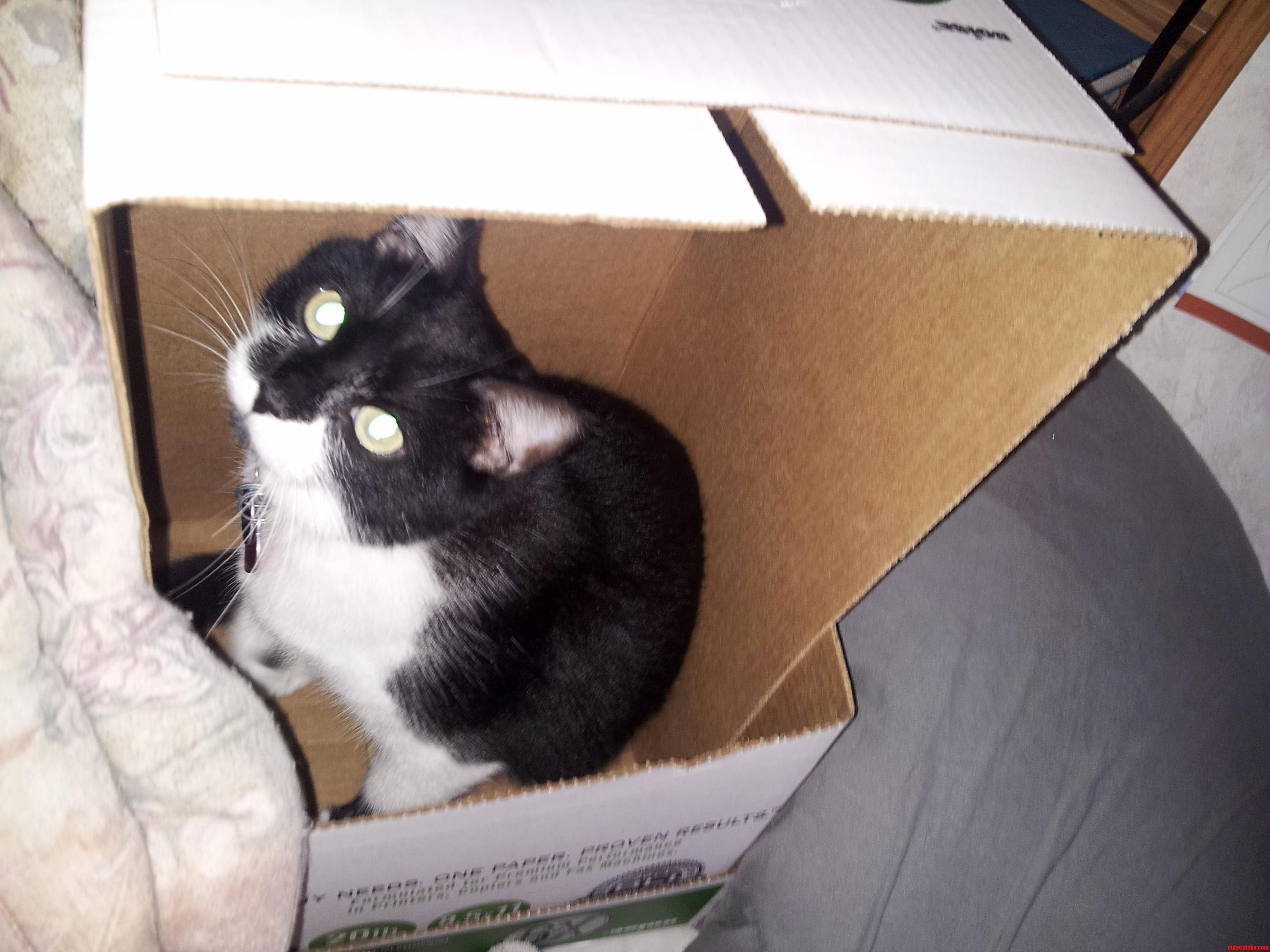 My Cat Decided The Box Was Hers. I Cant Say No To Those Eyes