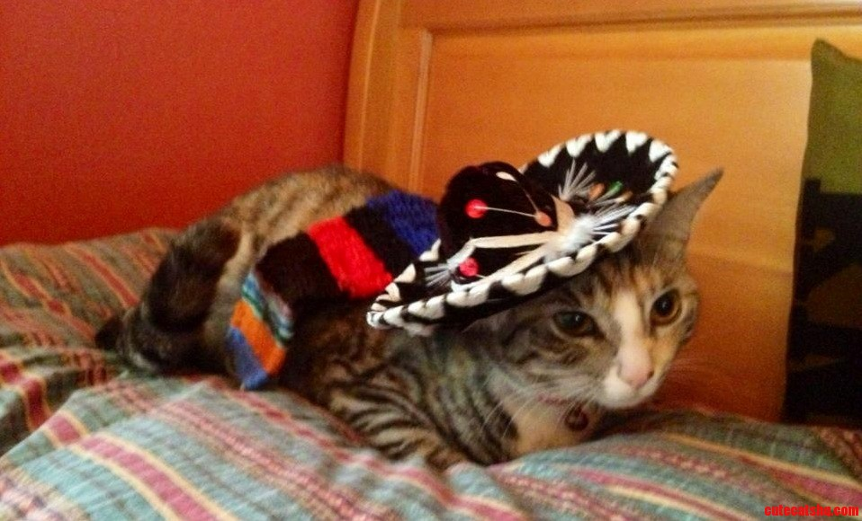 My Cat Did Not Like Her Costume