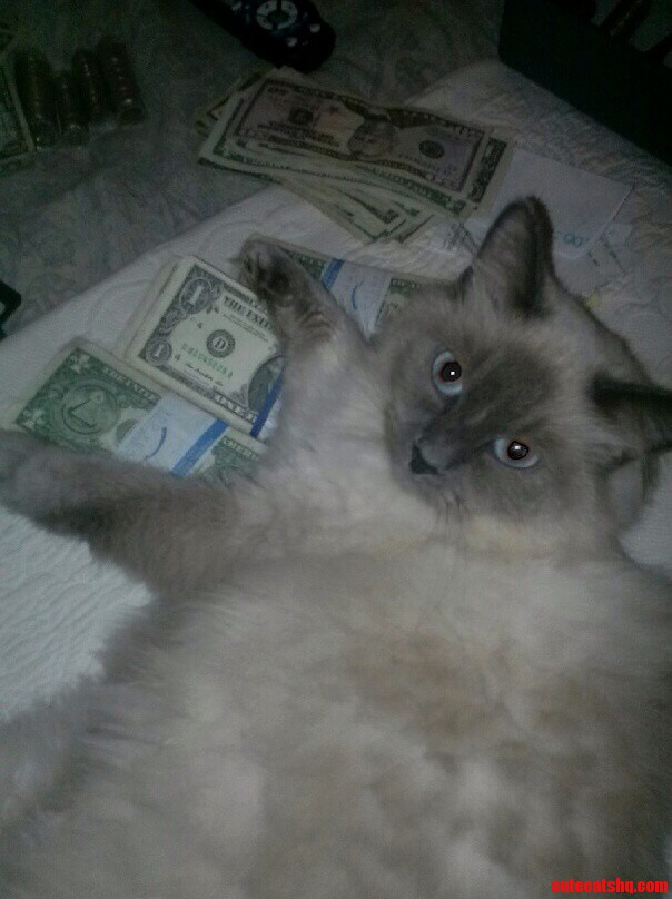 My Cat Gets Money.