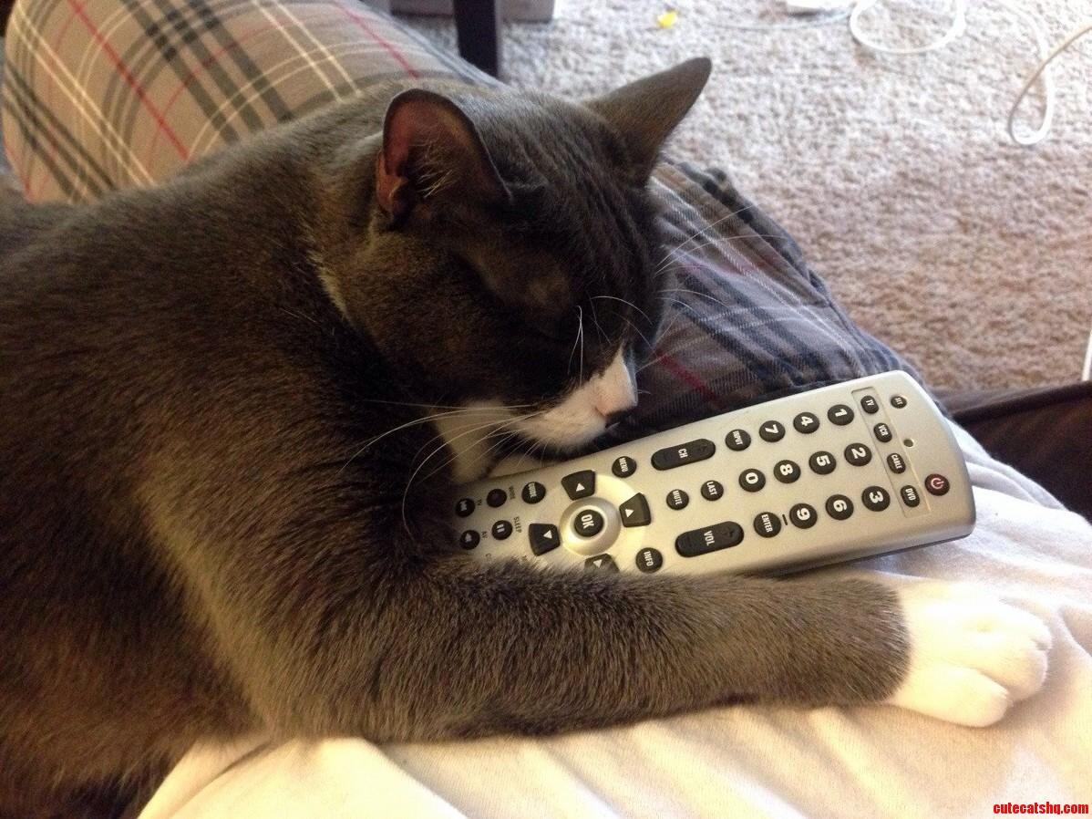 My Cat Has A Tv Problem.