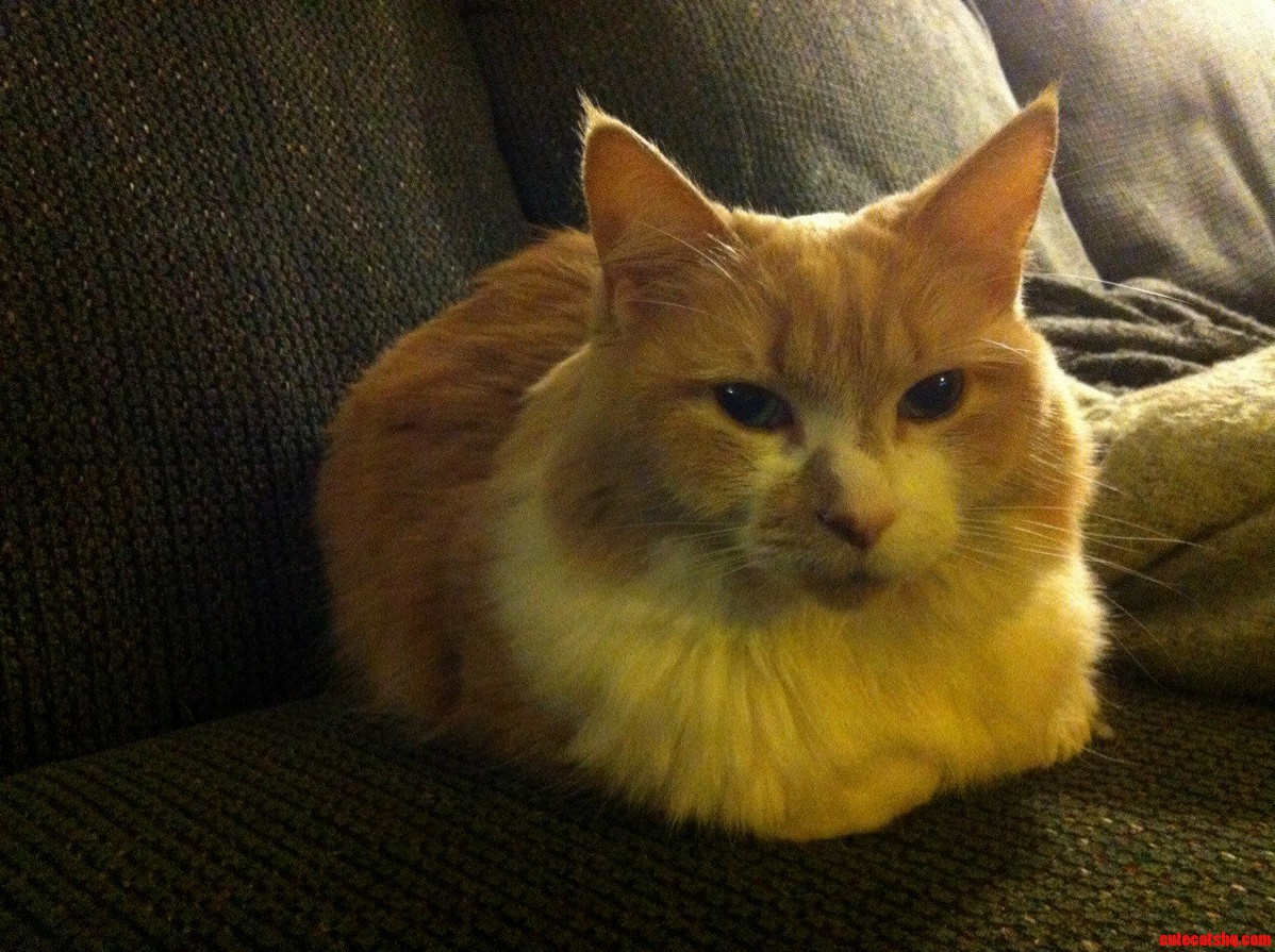 My Cat Is A Loaf Of Bread.
