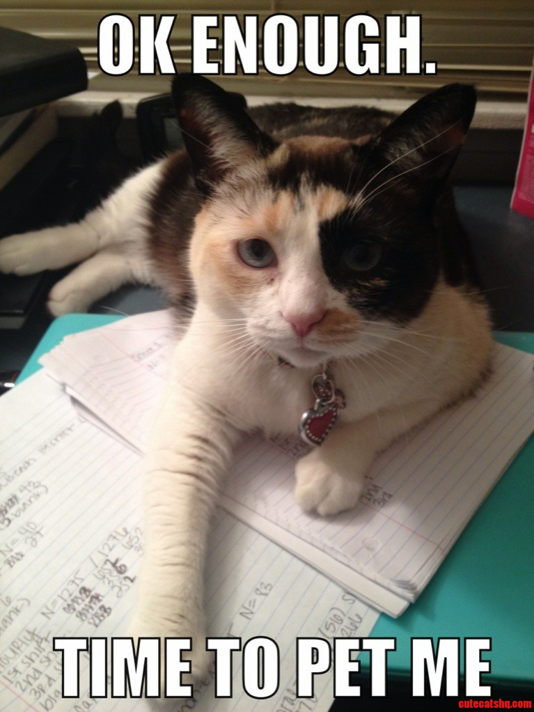 My Cat Only Lets Me Do Homework For Short Periods Of Time Before She Decides To Step In.