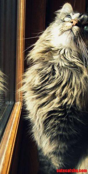 My Fluffy Cat Chloe