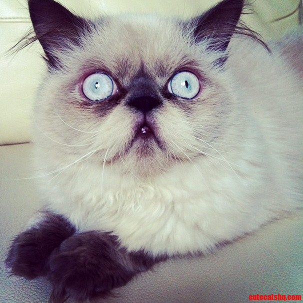 My Friends Cat Belongs On Here. Meet Stewie