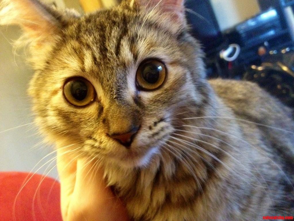 My Friends Kitten Is So Photogenic.