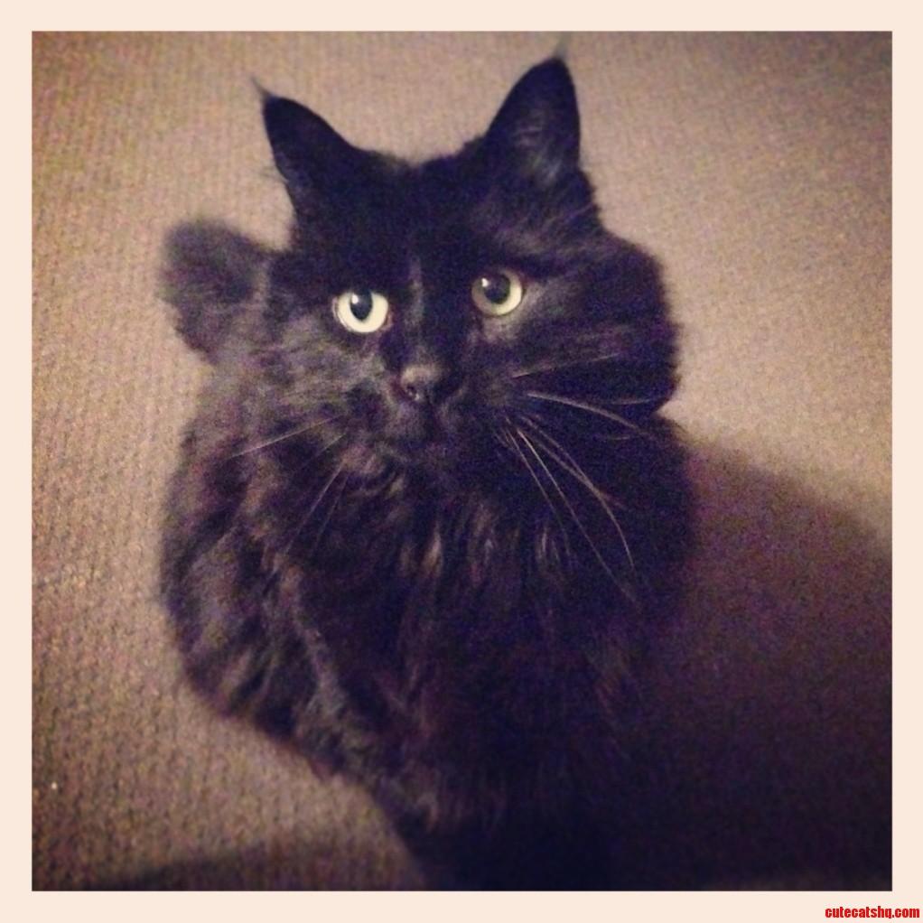 My Little Gentleman James T. Cat
