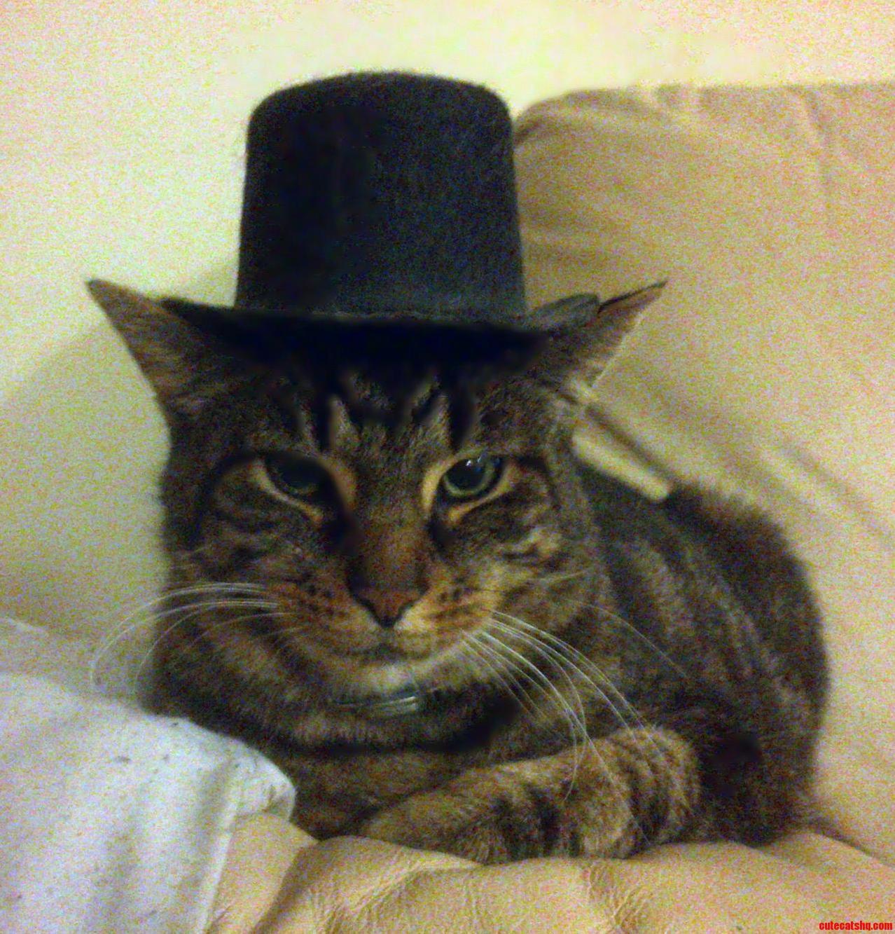 My Longcat Looking Very Gentlemanly.