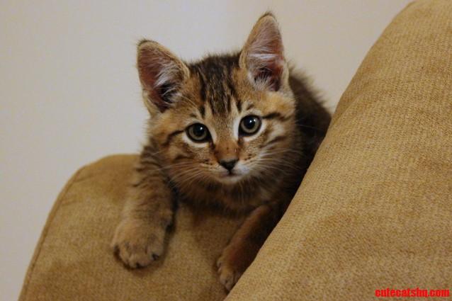 My New Kitten Hobbes