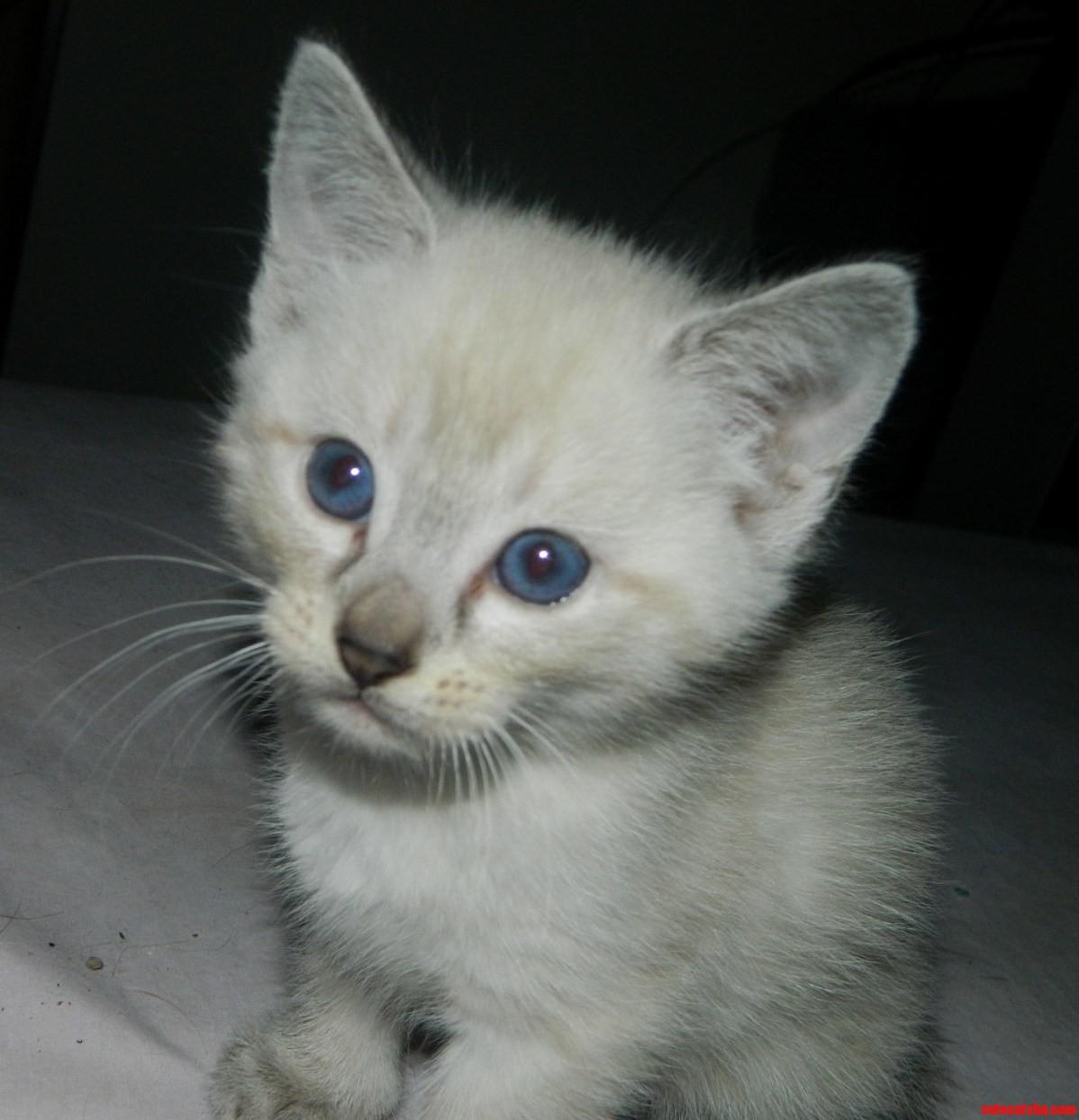 My New Little Buddy