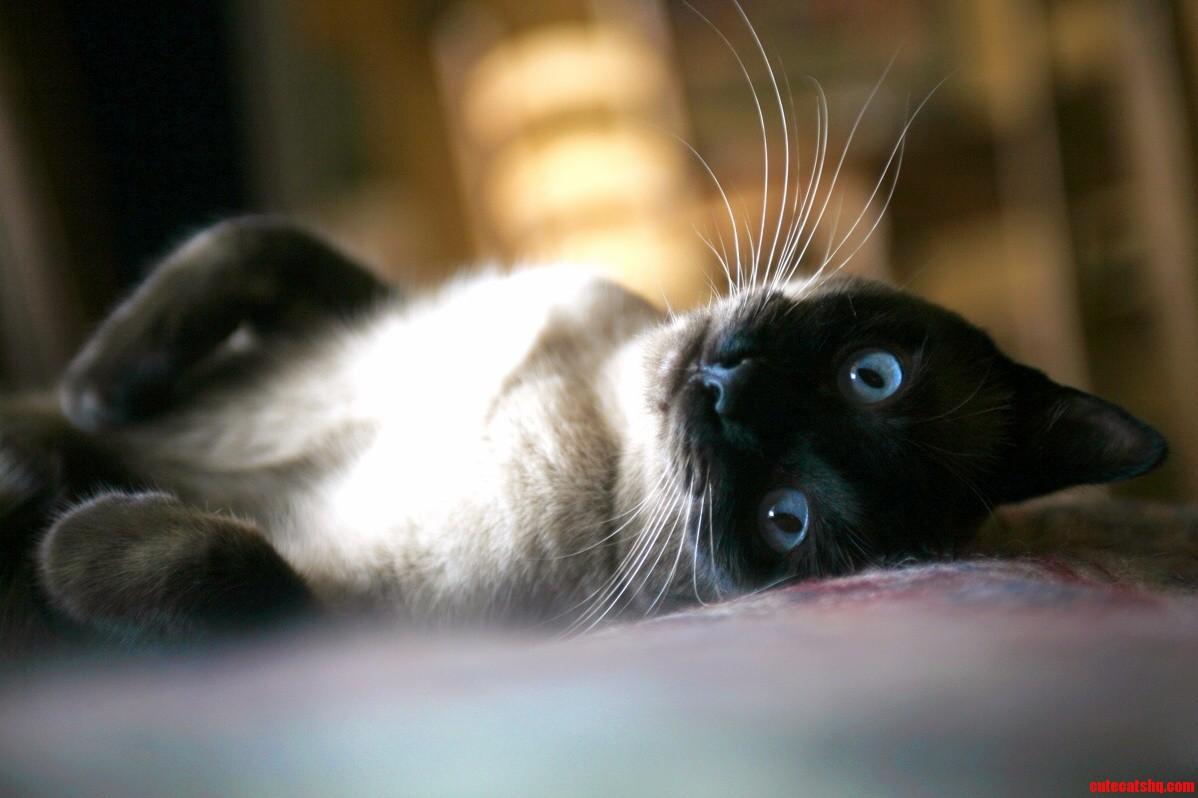 My Photogenic Fur Ball